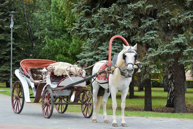 romantische Fahrt in einer Hochzeitskutsche zum Standesamt in Berlin, Potsdam oder Brandenburg