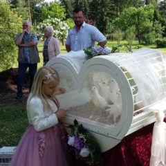 Hochzeitstauben Brandenburg