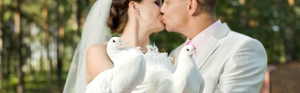 Hochzeitstauben in Berlin, Potsdam und Umgebung